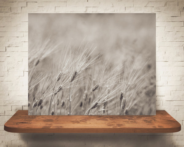 Wheat Photograph Sepia