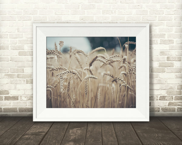 Wheat Photograph
