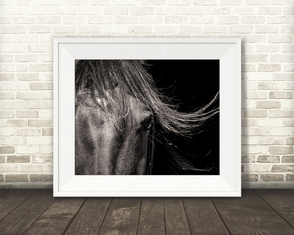 Horse Photograph Black White Brown Tone
