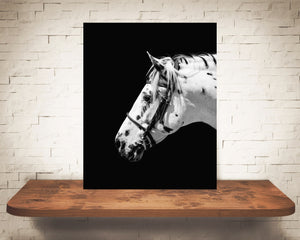 White Horse Photograph Black White