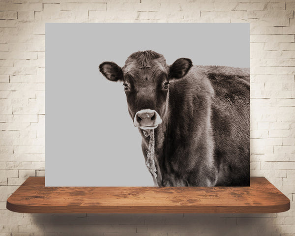 Jersey Cow Photograph Brown Tone