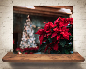 Christmas Tree Poinsettia Photograph