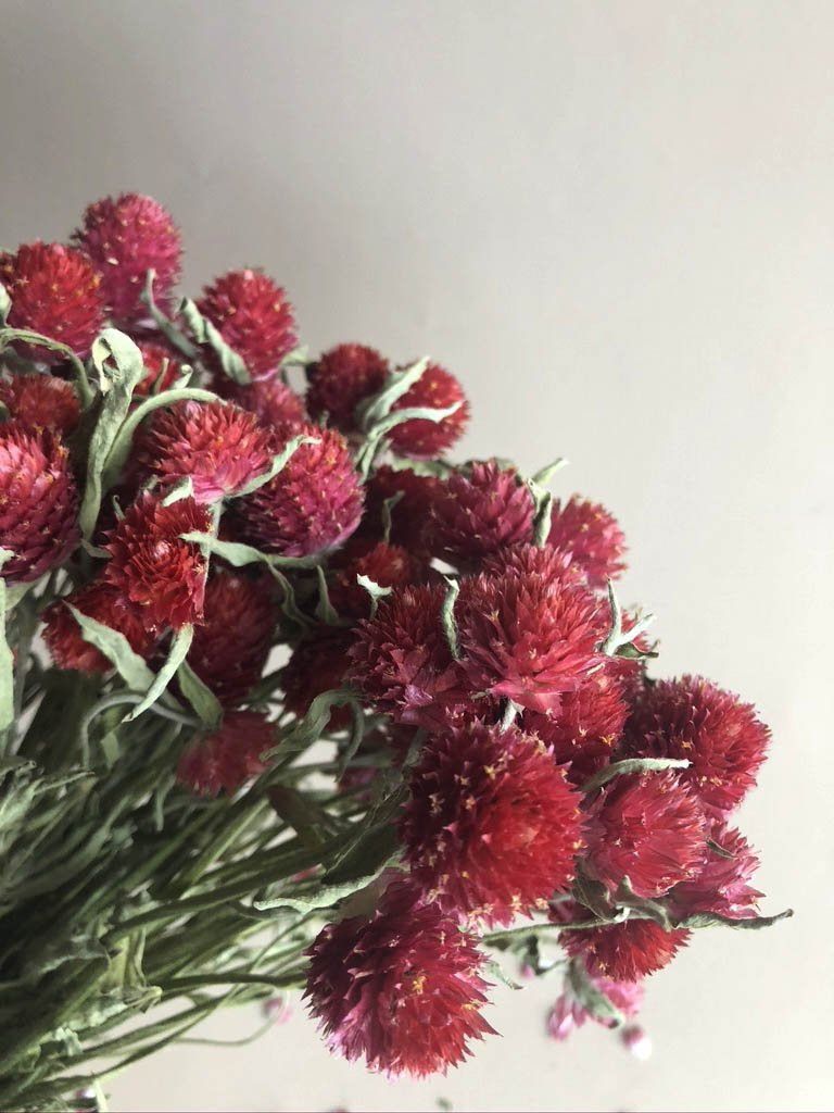 Globe Amaranth - Red