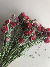 Load image into Gallery viewer, Globe Amaranth - Red
