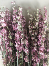 Load image into Gallery viewer, Larkspur - Pink
