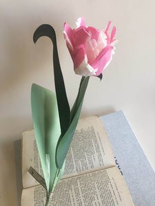 Parrot Tulip Stem - Bright Pink and White