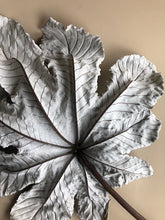 Load image into Gallery viewer, Cecropia Leaf