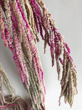 Load image into Gallery viewer, Amaranthus - Multi Colored
