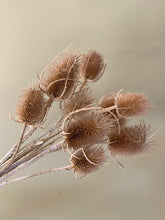 Load image into Gallery viewer, Thistle - Natural