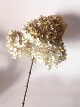 Load image into Gallery viewer, White Mophead Hydrangea Quercifolia Stems
