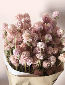 Globe Amaranth - Light Pink