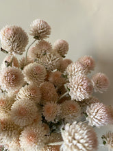 Load image into Gallery viewer, White Globe Amaranth