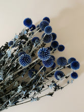 Load image into Gallery viewer, Globe Thistle