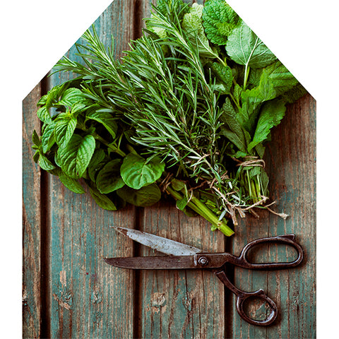 Aprons - Herbs