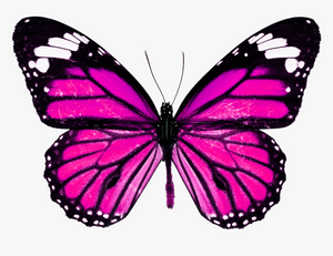 PINK DETAILED BUTTERFLY  HEAT STICKER DECALS FOR FABRIC , SHOES, PLASTIC