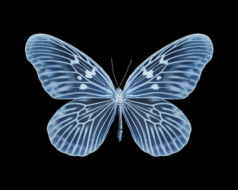 X-RAY BUTTERFLY HEAT STICKER DECALS FOR FABRIC , SHOES, PLASTIC
