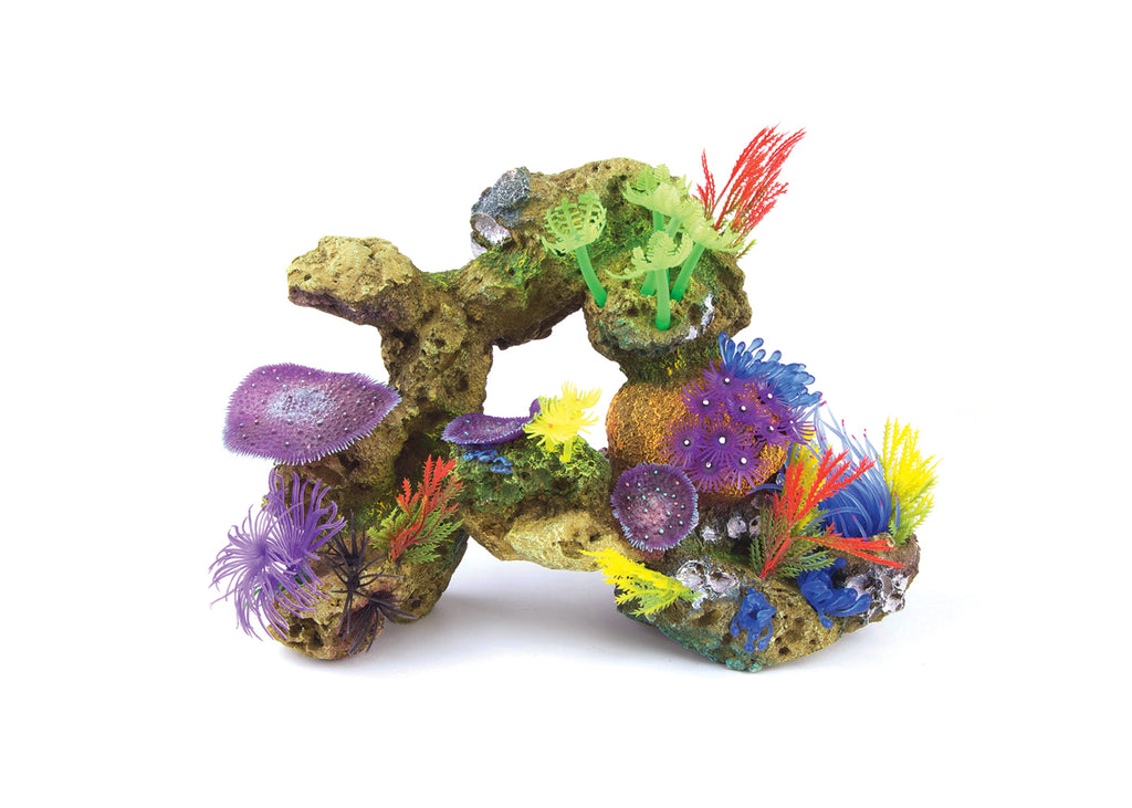 Kazoo Soft Coral With Rock and Plants