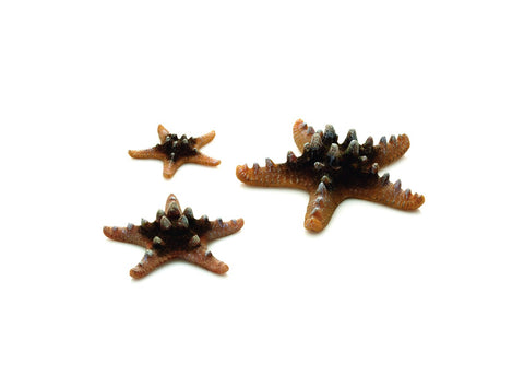 biOrb Sea Star - 3 Set