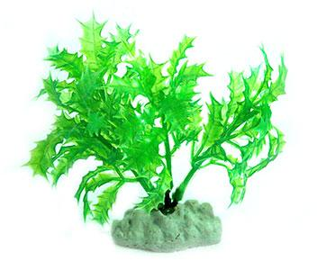AquarWorld Green Holly - 10cm