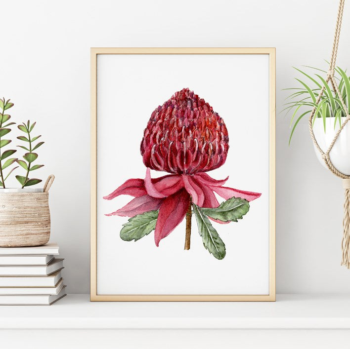 Warratah flower print