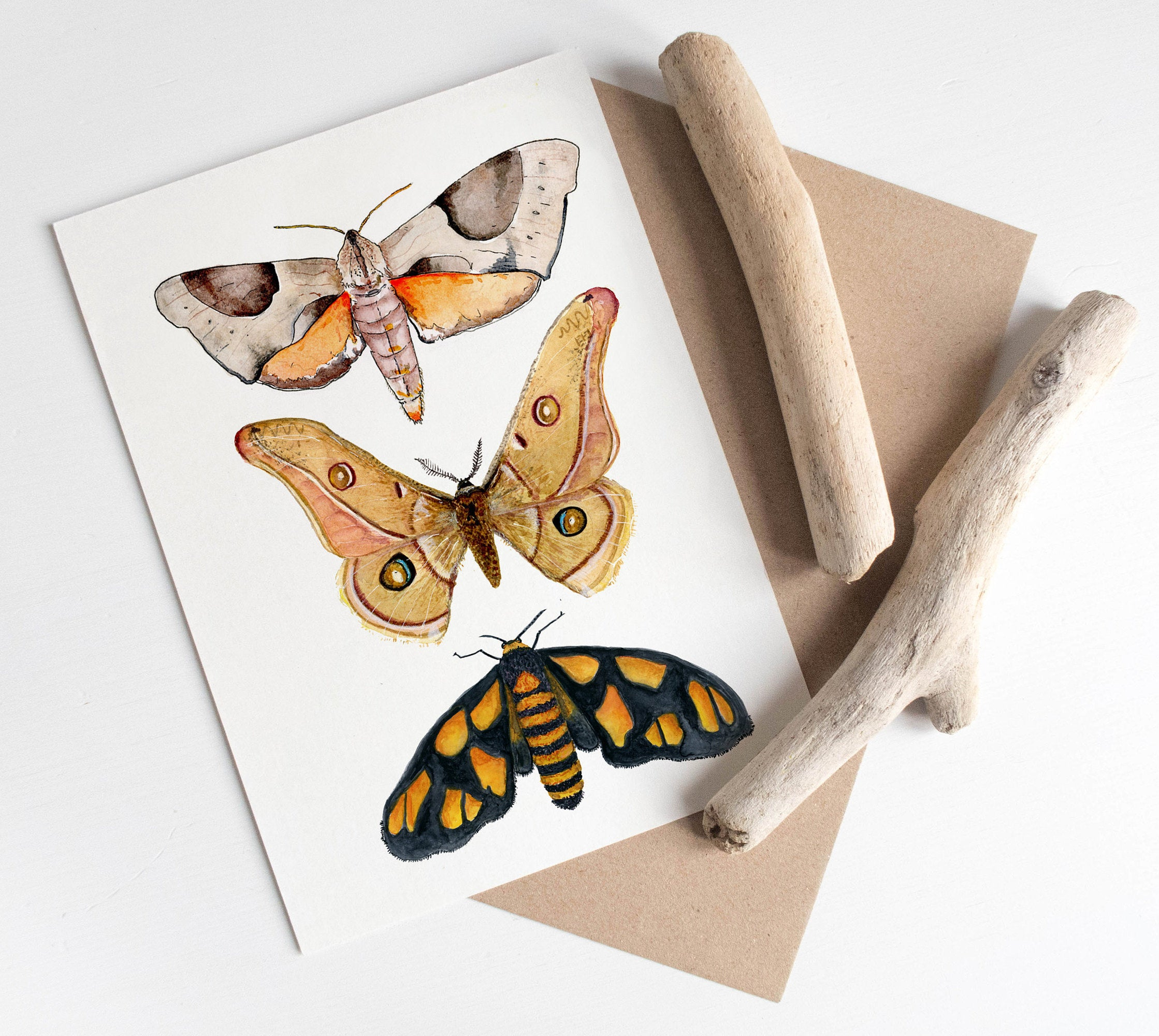 australian moths card