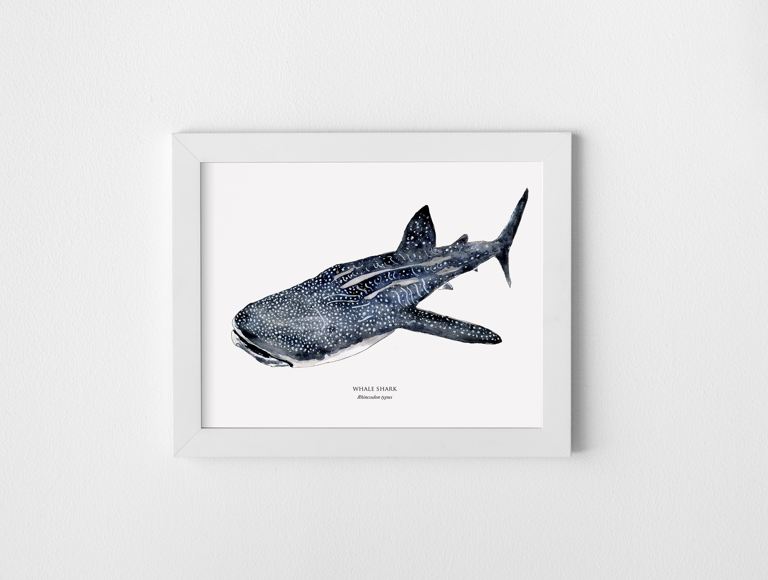 whale shark poster
