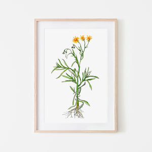 wildflower print - fire weed