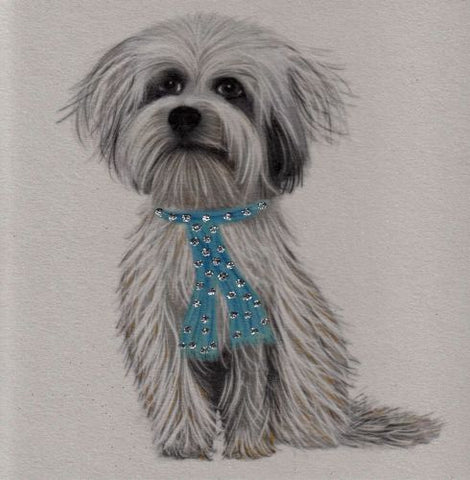 Cute dog in blue scarf card