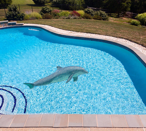 Dolphin Poolmat in water