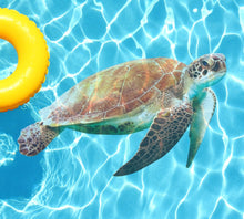 Load image into Gallery viewer, Sea Turtle Poolmat from above