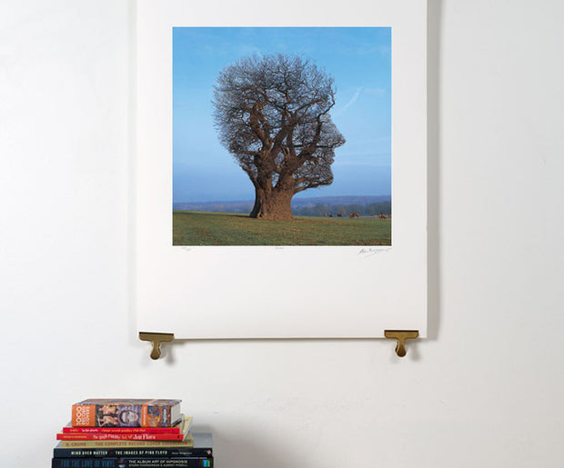Scale photo of Pink Floyd Tree of Half Life art print by Hipgnosis
