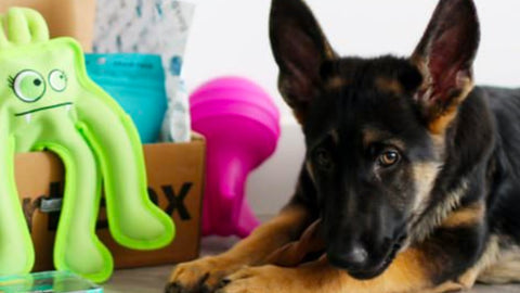 Are 3d Printed Items Safe for Pets?