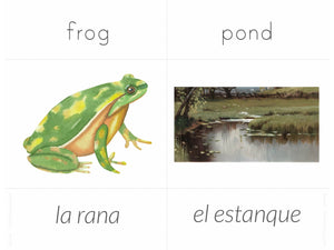 Spanish + English Nature Flashcards (DIGITAL)