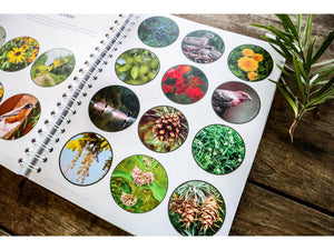 Level 2 Student Notebook (Gentle + Classical Nature)