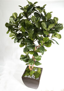 2629-8  8' Fiddle Leaf Fig Tree in Zinc