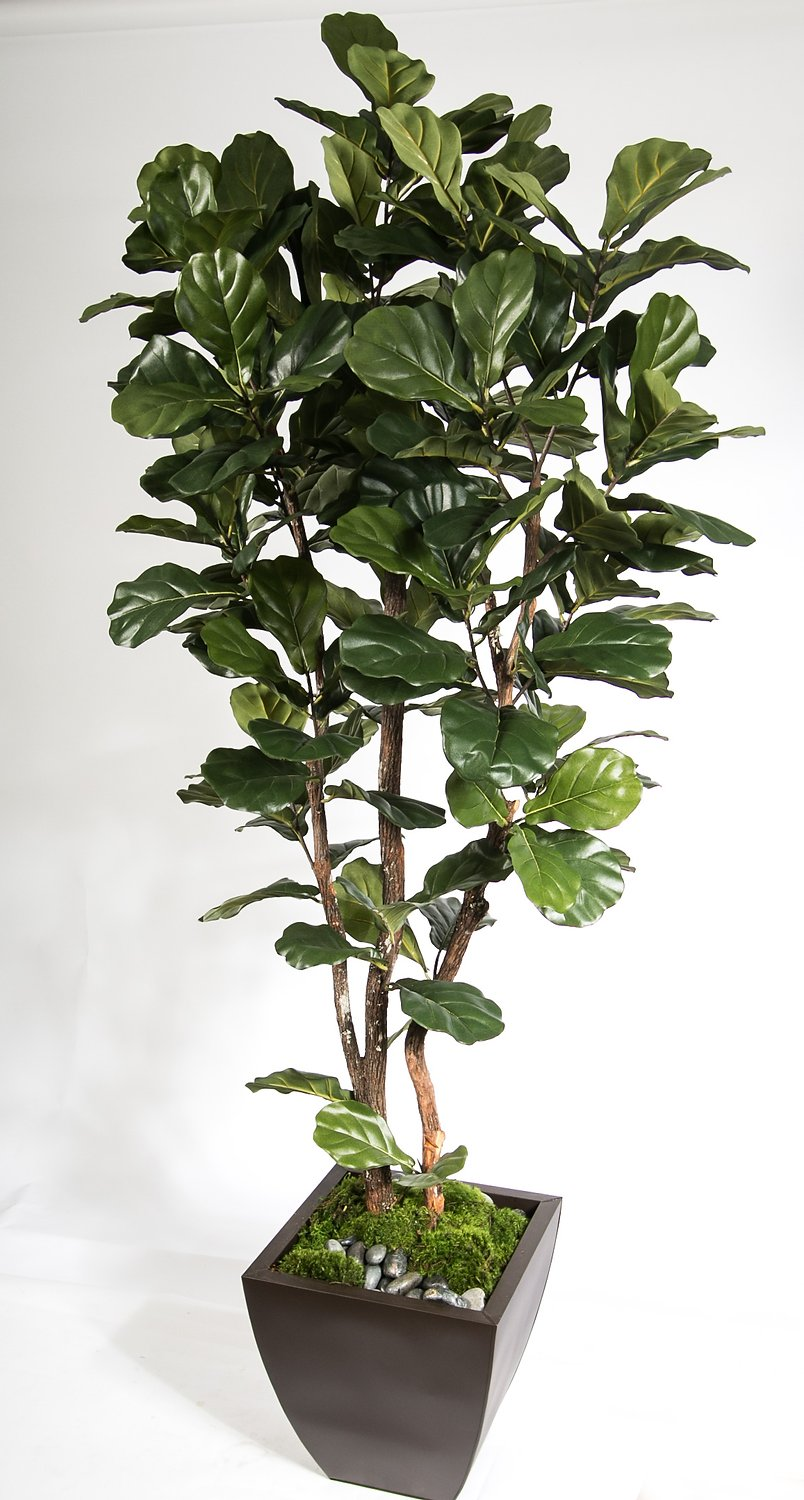 2629-7  7' Fiddle Leaf  Tree in Zinc