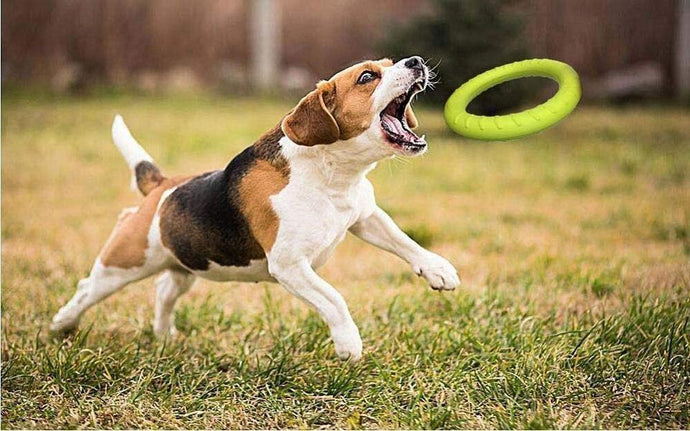#petproducts2u Dog Training Ring Outdoor Interactive Toy