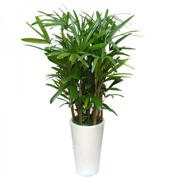 Nasa 39 s list of best plants for cleaning indoor air for Nasa indoor plant list