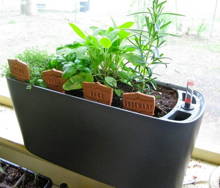 Lechuza Windowsill herbs self-watering system sub-irrigated