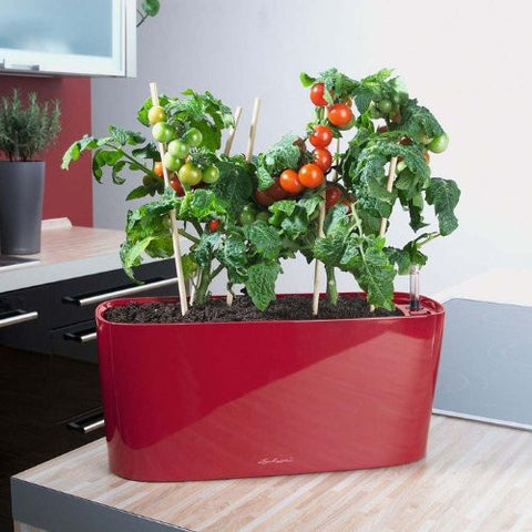 Lechuza Windowsill self-watering system sub-irrigated planter