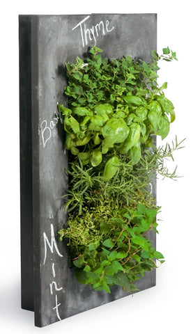 Specialty Chalkboard and Old Crate GroVert Living Wall Frame Kits
