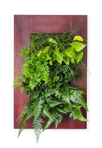 Rustic Framed GroVert Living Wall Kits