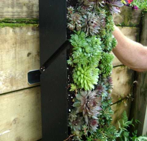 Hanging the Living Wall Planter