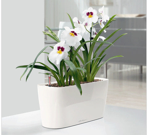 Lechuza white window will self-watering system sub-irrigated planter