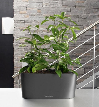Lechuza window sill self-watering system planter