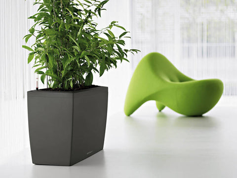 Cararo self-watering planter