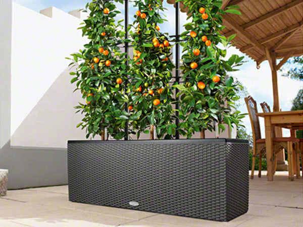 Garden Watering System >> Trio Patio Cottage Planter | Urban Zeal Planters