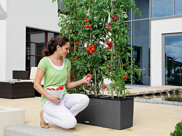 Trio Self-watering Sub-irrigation system