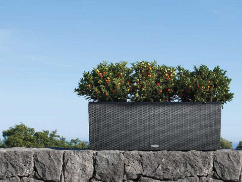 Black Trio Patio Planter Self-watering Sub-irrigation system