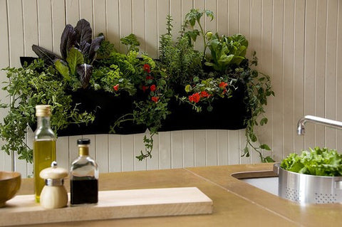 Wally One Vertical Garden
